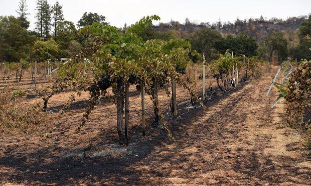 Vinohrad je určen pro každodenní tvrdou práci